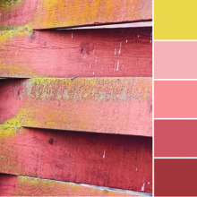 Color Love | Yellow & Pinks