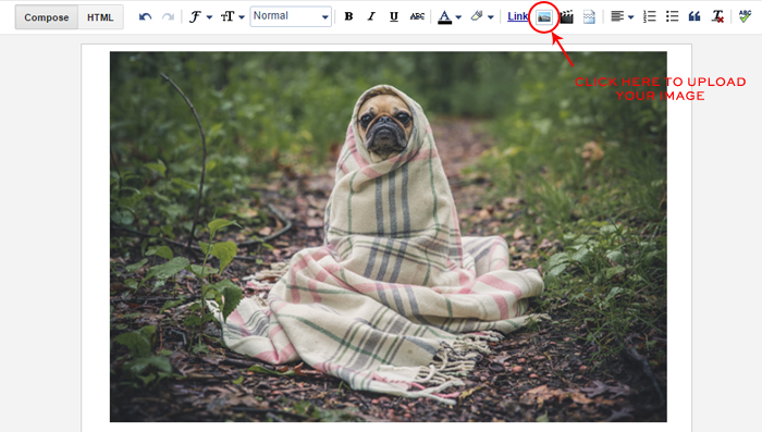 adding-alt-text-to-images-in-blogger-example