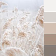 Color Love | Soft Neutrals