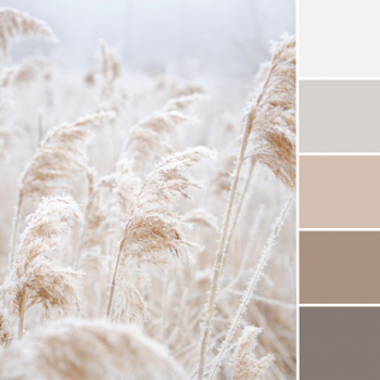 Color Love | Soft Neutrals