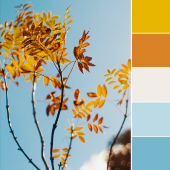 Color Love | Mustard, Burnt Orange & Sky Blue