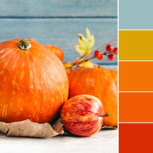 Color Love | Pumpkin Orange
